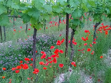 Eight Day Food And Wine Tours | Toscana e Gusto - Guided Tours around Cortona